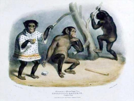 hullmandel chimpanzees